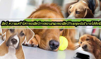 สัตว์ ความเศร้าโศกของสัตว์การตอบสนองของสัตว์กับมนุษย์อธิบายได้ดังนี้