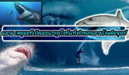 ฉลาม เหตุผลที่เปิดเผยแรงจูงใจที่แท้จริงของฉลามโจมตีมนุษย์